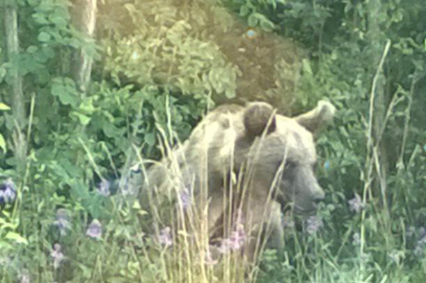 E l'orso ritorna sui monti